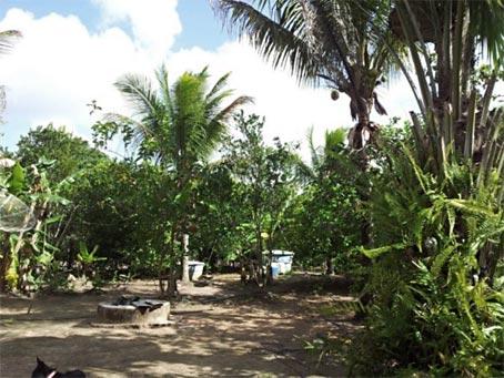 Casa de Fazenda em Excelente Localização em Trancoso