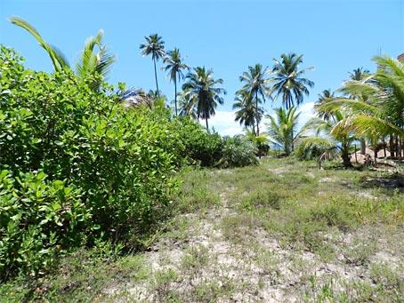 Terreno de Frente Para o Mar perto de Barra Grande