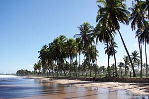 Busca Vida Praia