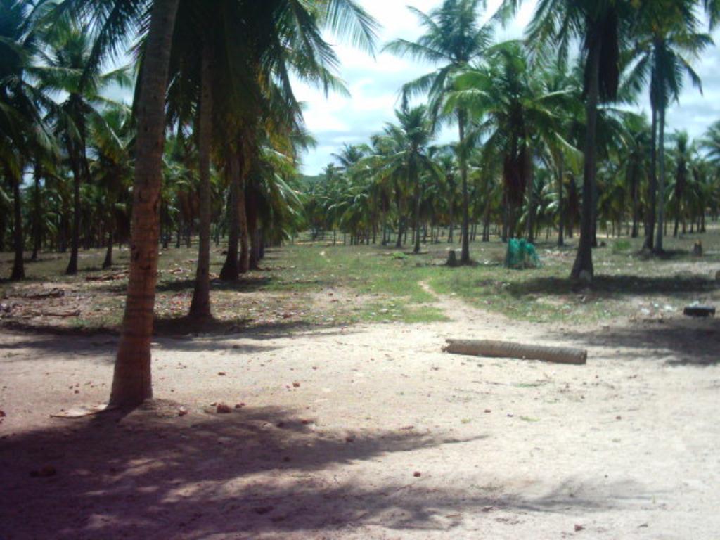 Large Lot Beira Mar 4