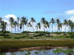 Área 51 Hectares Beira-Mar 1