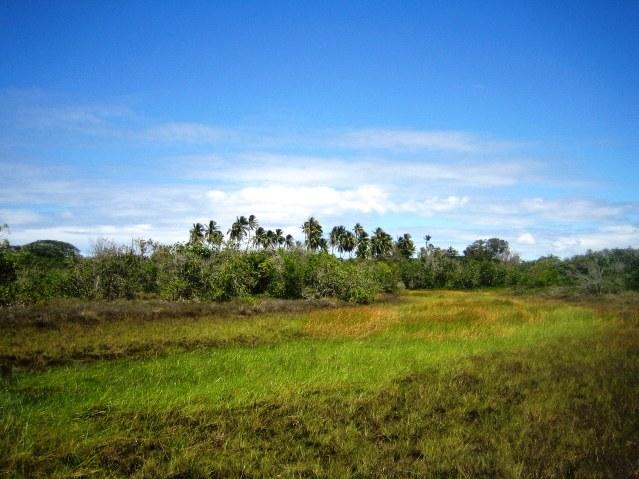 Área 51 hectares Beira-mar 4