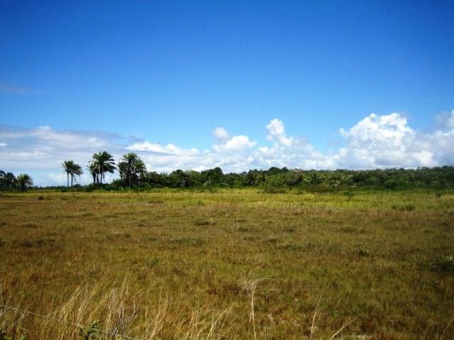 Área 51 hectares Beira-mar 6
