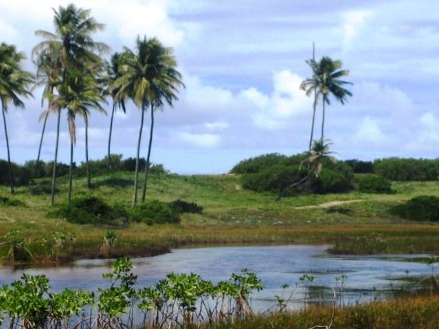 Área 51 hectares Beira-mar 7