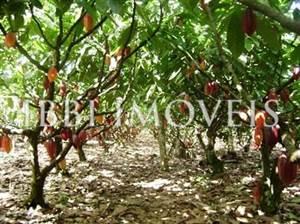 Fazenda de 415 hectares em Camamú