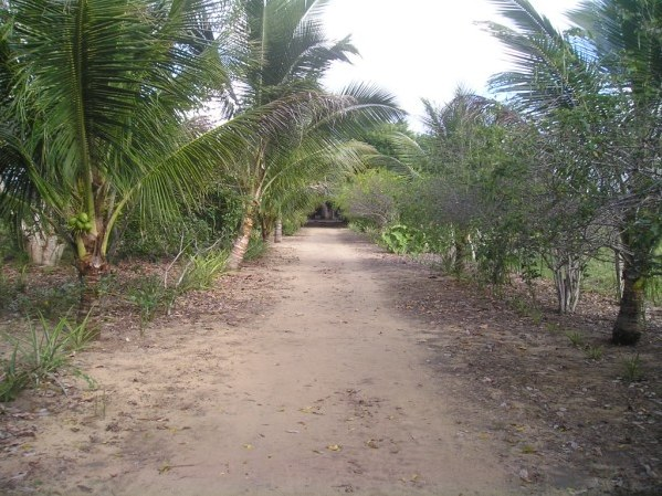 Farm of 20 hectares 3