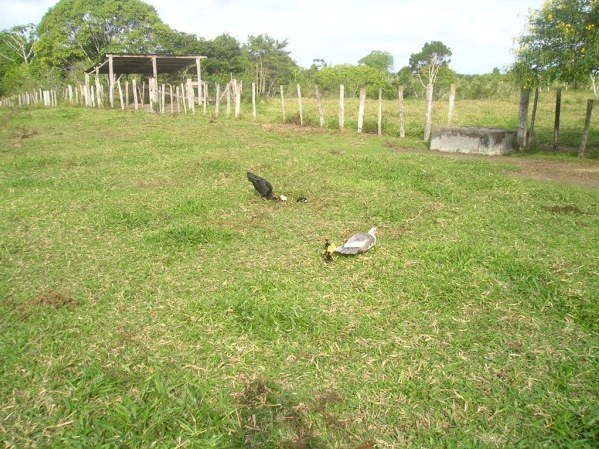 Farm of 20 hectares 8