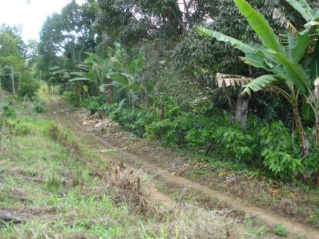 Farm with 32 hectares in Una in Bahia 15