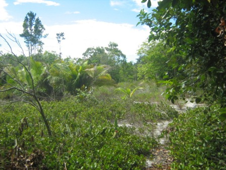 Agriturismo 113 ettari vicino a Belmonte 4