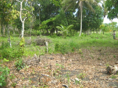 Farm 113 hectares next to Belmonte 5