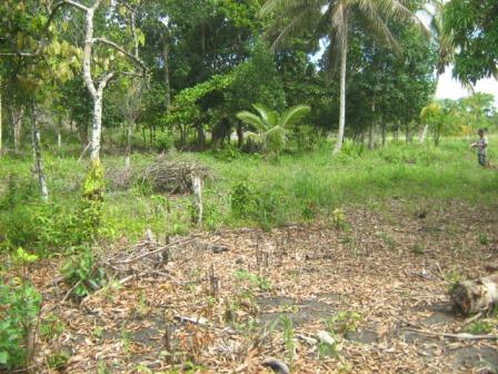 Agriturismo 113 ettari vicino a Belmonte 5