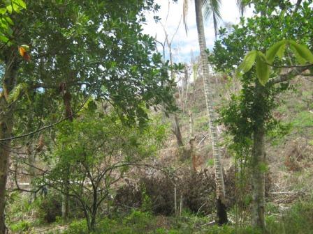 Agriturismo 113 ettari vicino a Belmonte 7