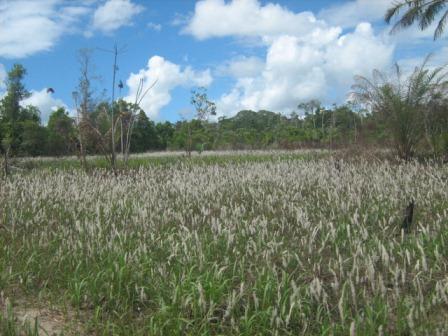Agriturismo 113 ettari vicino a Belmonte 9