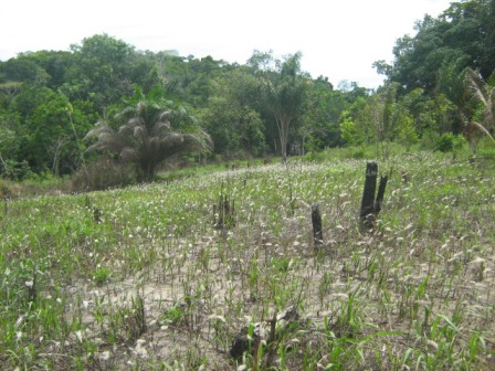 Farm 113 hectares next to Belmonte 10