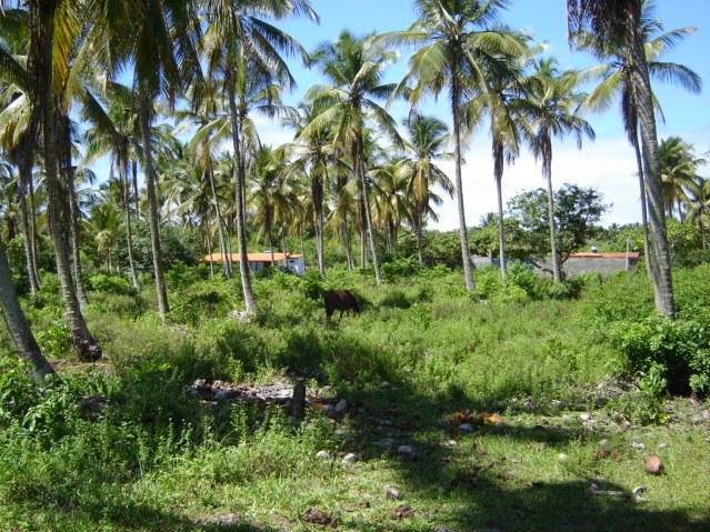 Terrenos Próximos A Quarta Praia 1