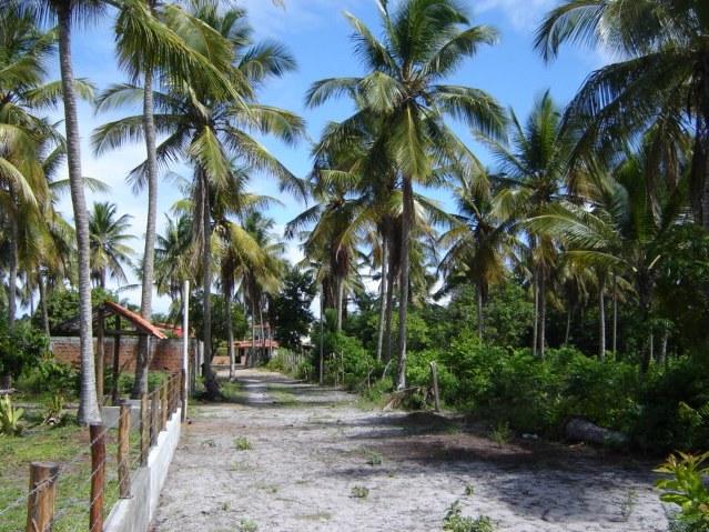 Terrenos Próximos A Quarta Praia 2