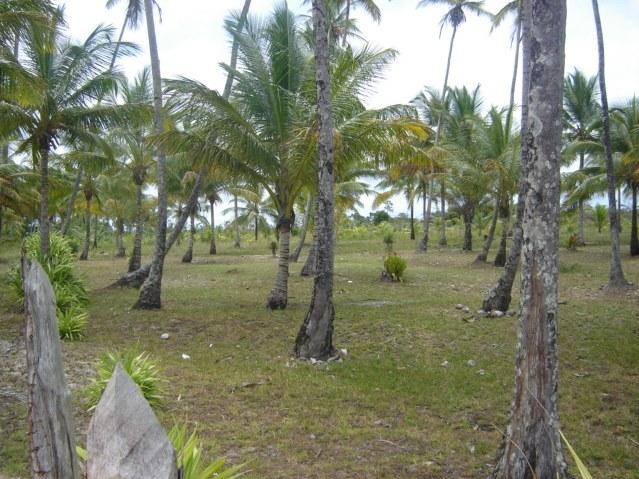 Praia do Pratigi 3
