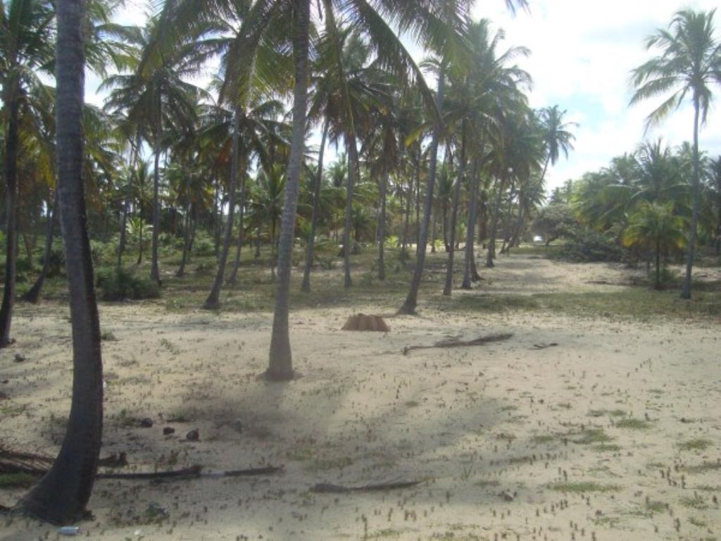Beautiful 3,000m² site Foot In The Sand With Wide Area In Mogiquiçaba 12
