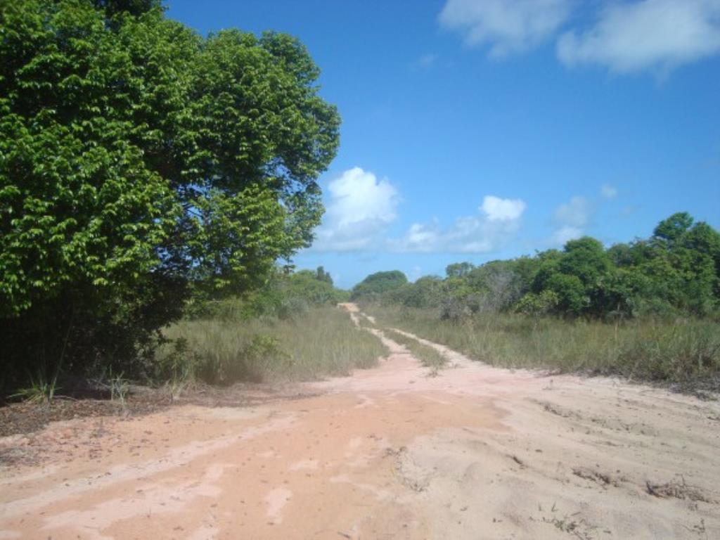 Belíssimo Sítio De 3.000M² Pé Na Areia Com Extensa Área Em Mogiquiçaba 15