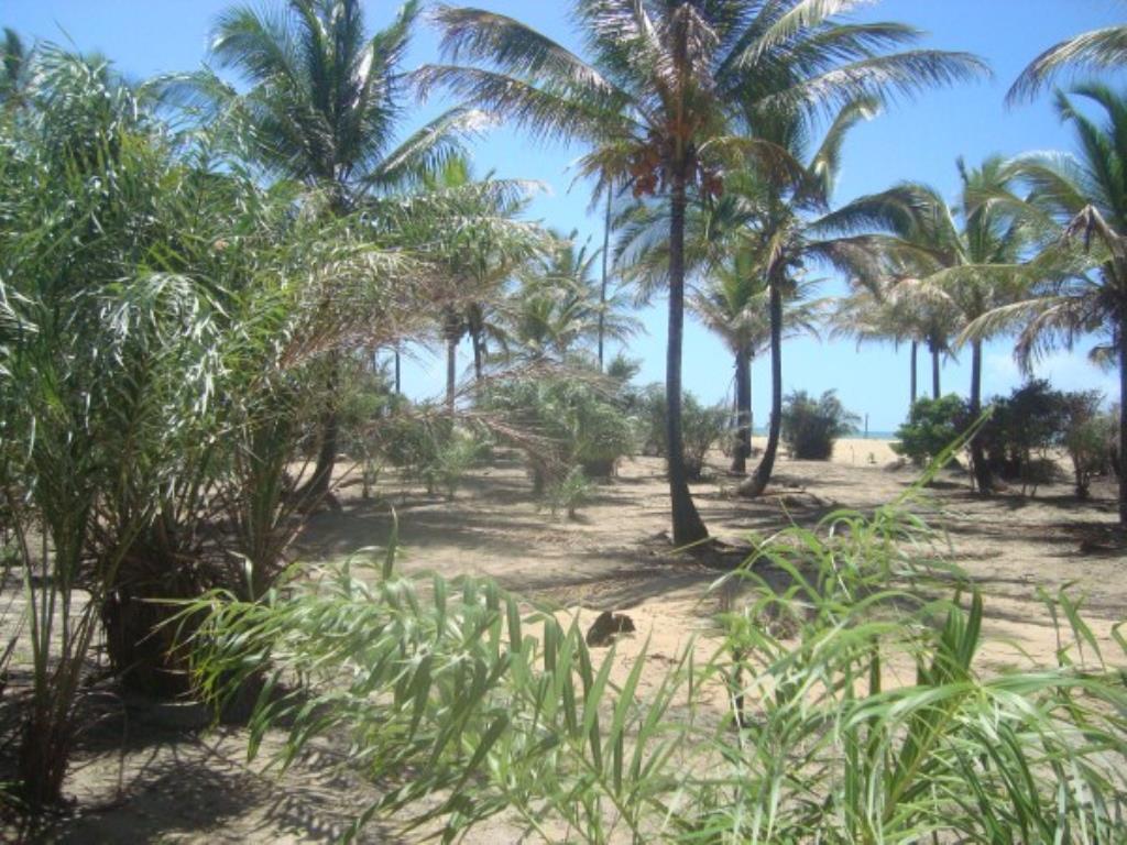 Belíssimo Sítio De 3.000M² Pé Na Areia Com Extensa Área Em Mogiquiçaba 2