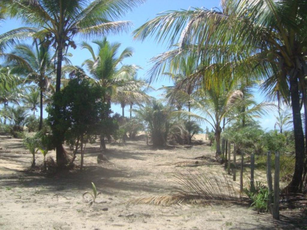 Belíssimo Sítio De 3.000M² Pé Na Areia Com Extensa Área Em Mogiquiçaba 3
