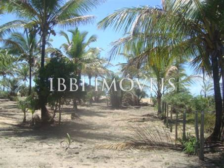 Beautiful 3,000m² site Foot In The Sand With Wide Area In Mogiquiçaba 3