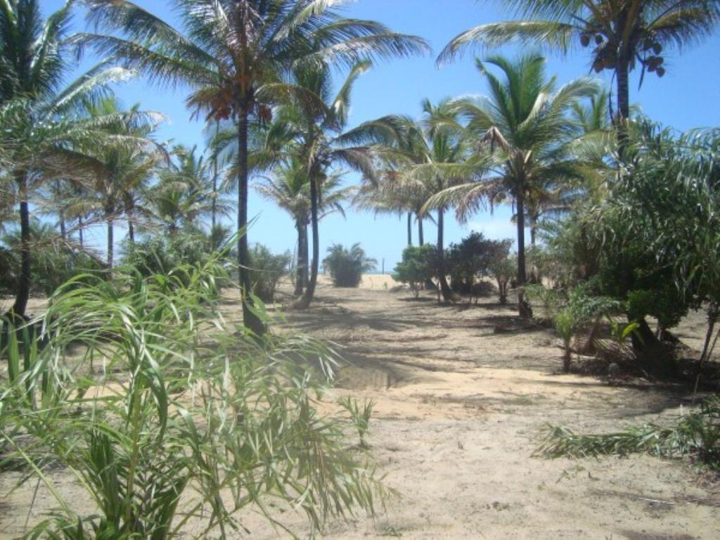 Beautiful 3,000m² site Foot In The Sand With Wide Area In Mogiquiçaba 4