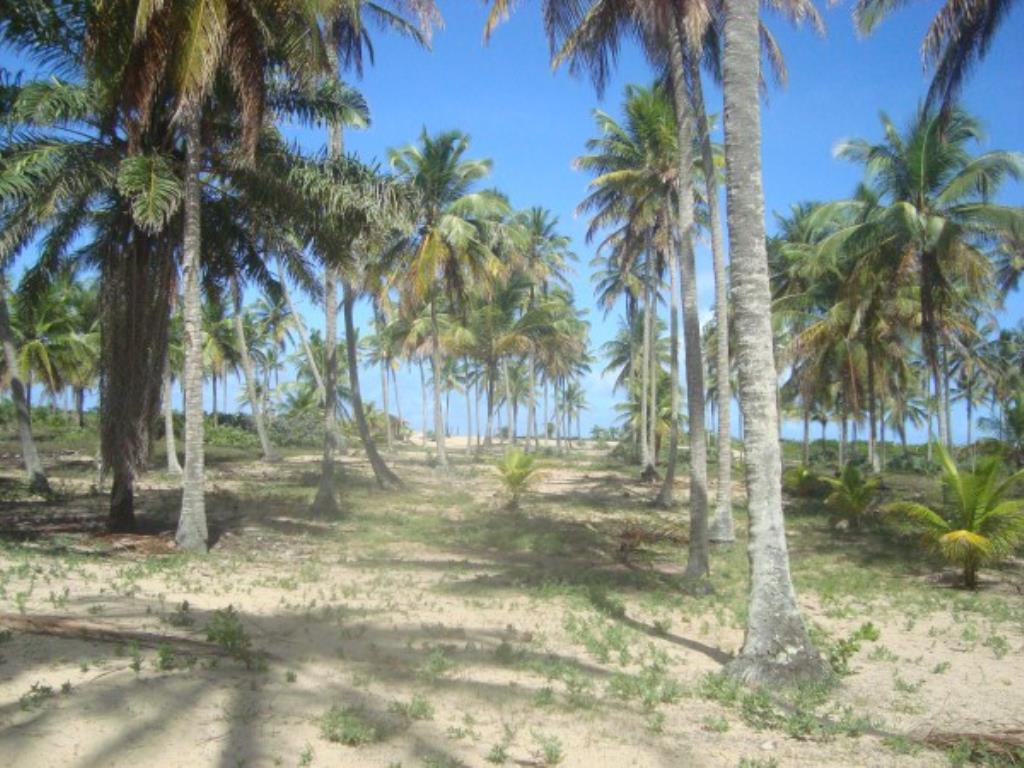 Belíssimo Sítio De 3.000M² Pé Na Areia Com Extensa Área Em Mogiquiçaba 7
