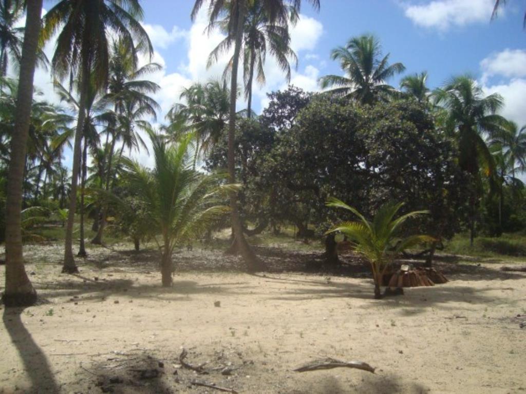 Belíssimo Sítio De 3.000M² Pé Na Areia Com Extensa Área Em Mogiquiçaba 8