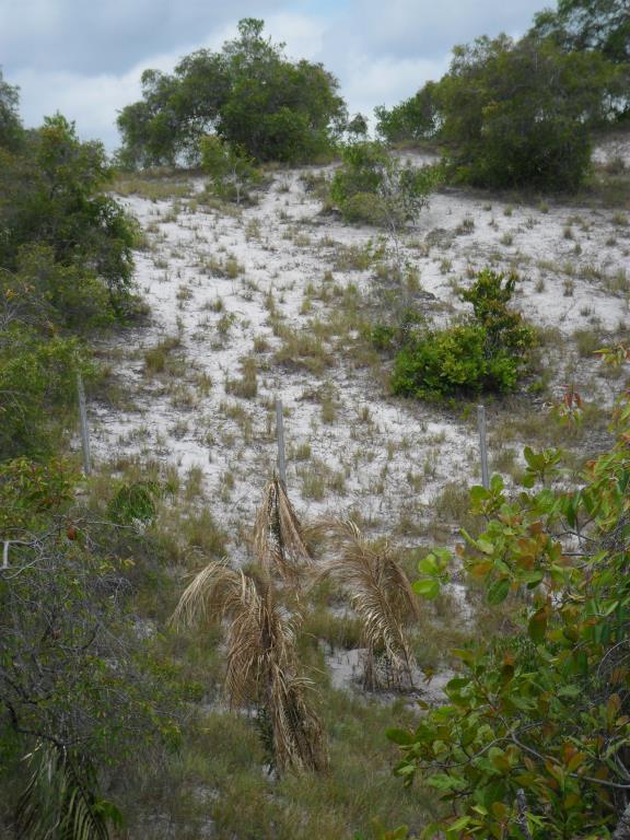 Belo Terreno Frente Á Mar  6
