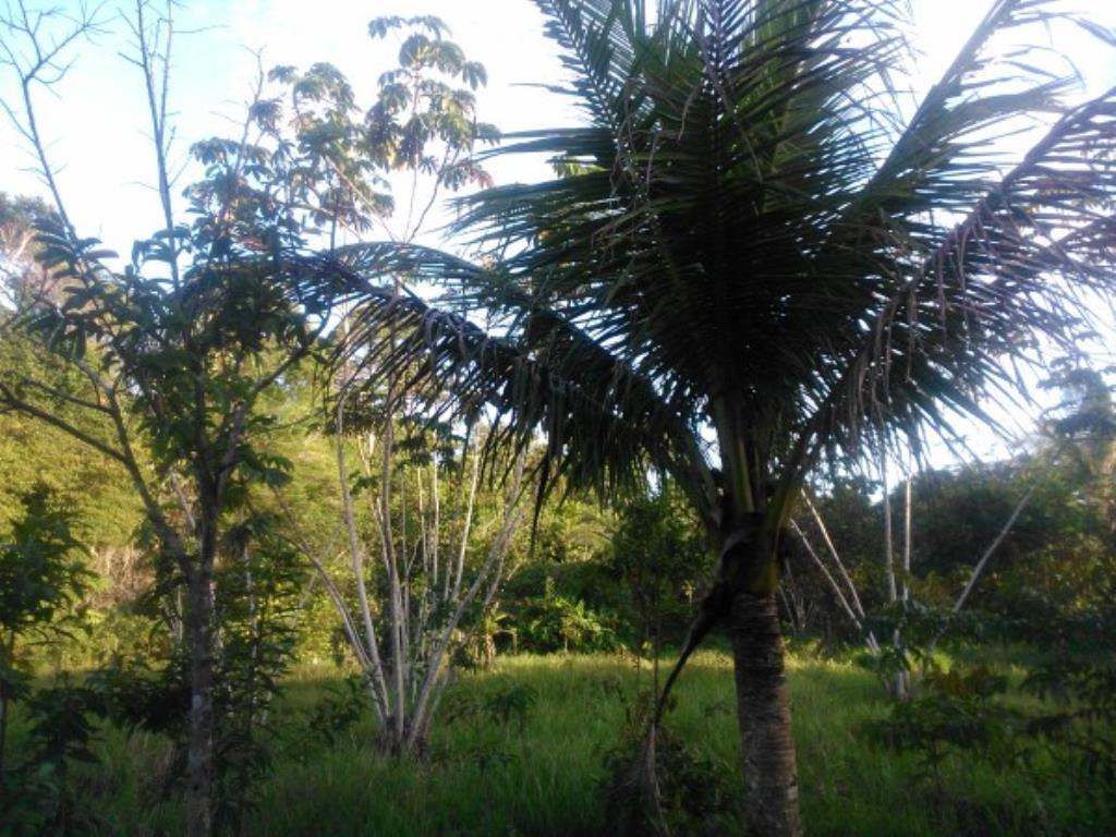 Chácara Em Local Nobre De Próximo Ao Aeroporto E Ao Condomínio Terra Vista Na Beira Da Pista Ba001 12