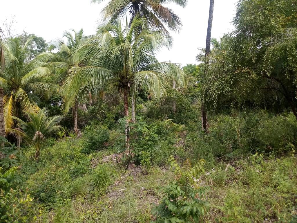 Excellent Land Of 1350M In Morere 4