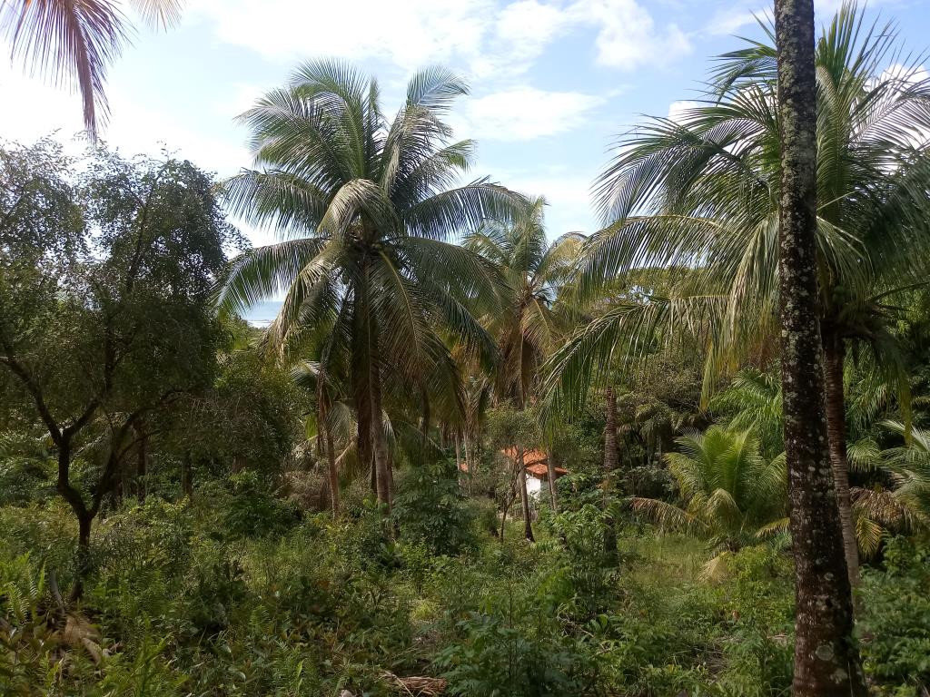 Excellent Land Of 1350M In Morere 6
