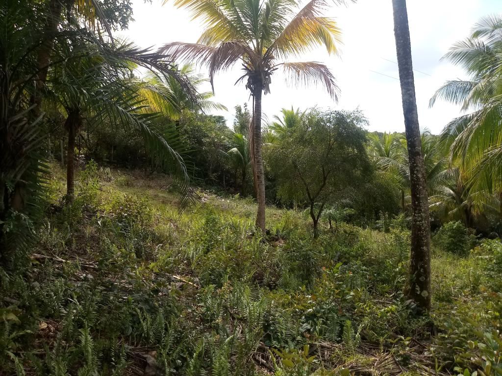Excellent Land Of 1350M In Morere 10