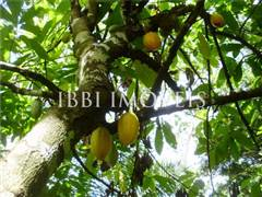 Fazenda Agroecológica 3