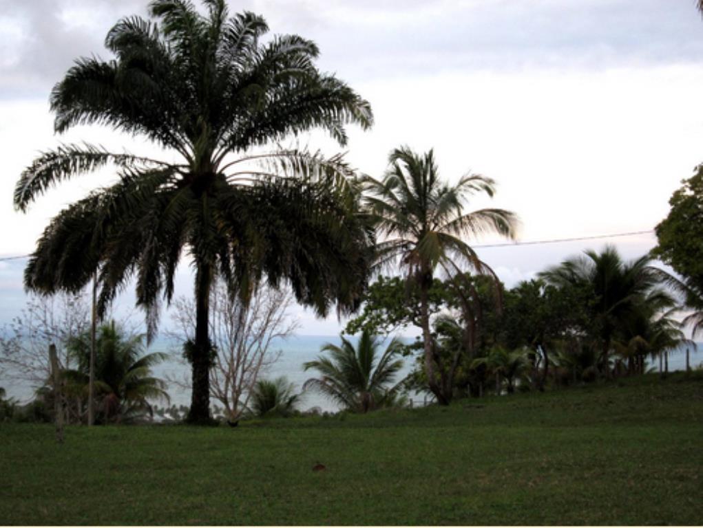 Fazenda Com 54 Hectares Próximo À Praia 3