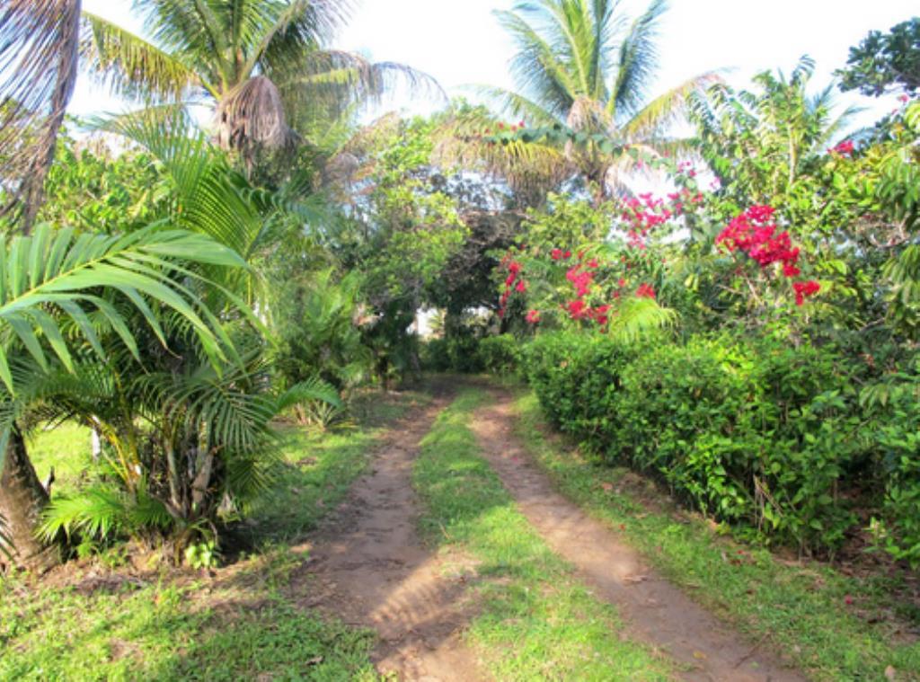 Fazenda Com 54 Hectares Próximo À Praia 5