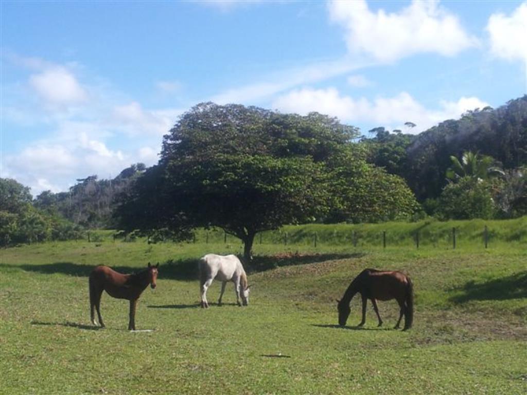 Fazenda De 35Ha Em Com Vista Mar, Rio E Estrutura Completa 1