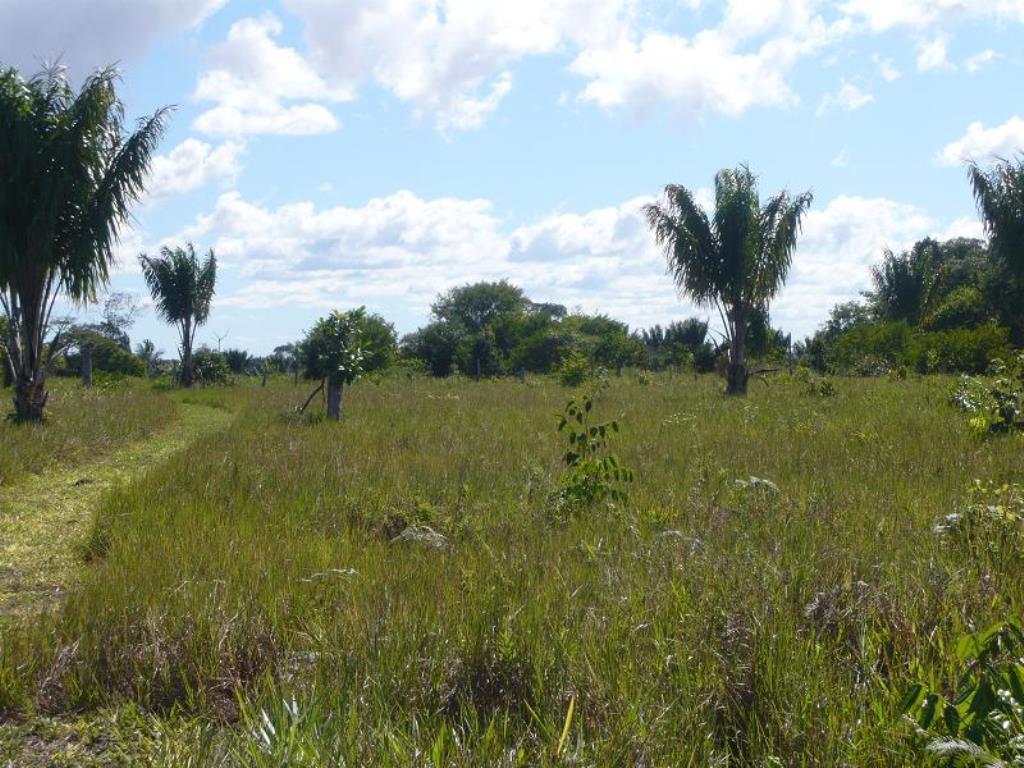 Fazenda De 35Ha Em Com Vista Mar, Rio E Estrutura Completa 10