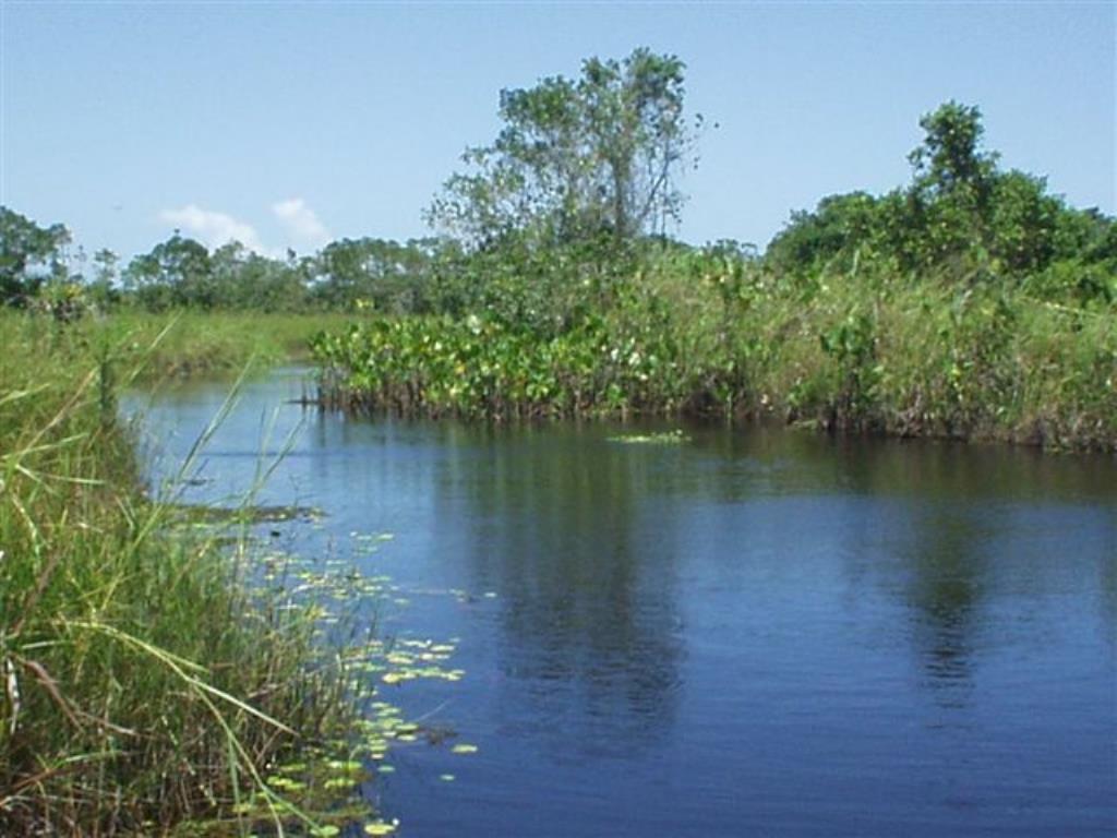Fazenda De 35Ha Em Com Vista Mar, Rio E Estrutura Completa 11