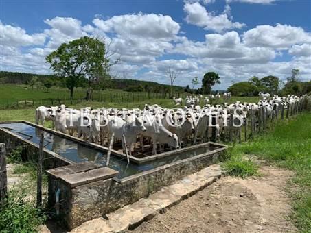 Livestock Farm, Cloned Cocoa And Coffee 3