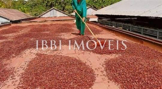 Livestock Farm, Cloned Cocoa And Coffee 11
