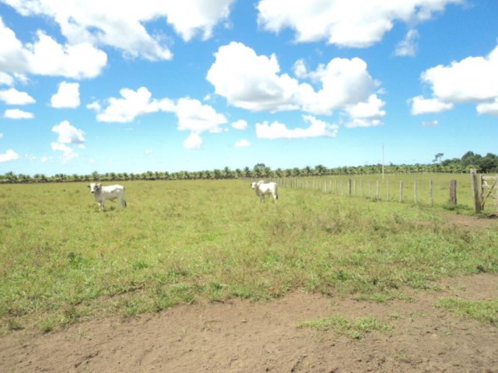 Fazenda Região De Com 5720 Ha Super Estruturada Para Pecuária; Rica Em Água Corrente E Com Várias Lagoas E Rio Com Barragens 6