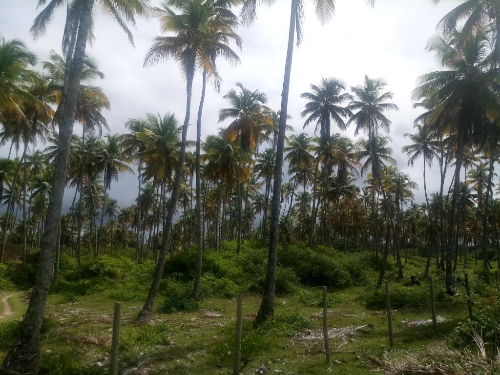 Garapuá Paradise 4