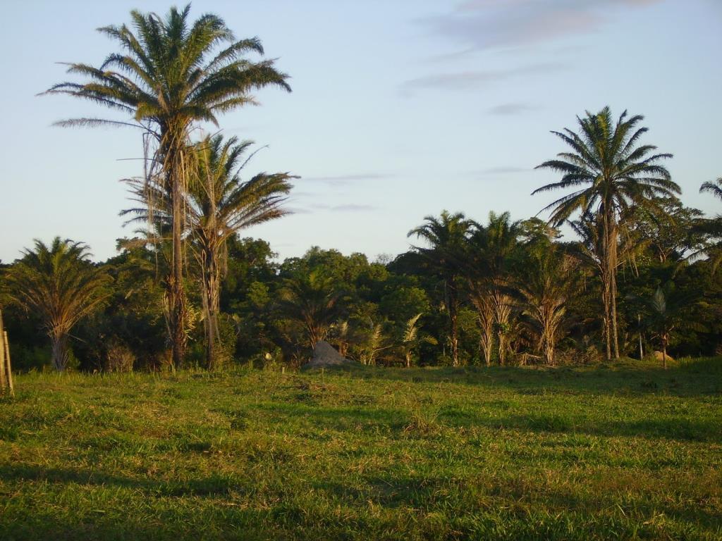 Imensa Ilha Península-Ideal Para Projetos Ecológicos 1