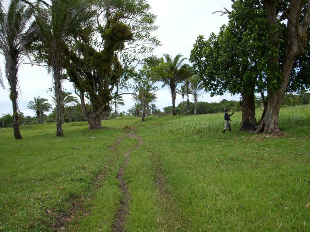 Imensa Ilha Península-Ideal Para Projetos Ecológicos 5