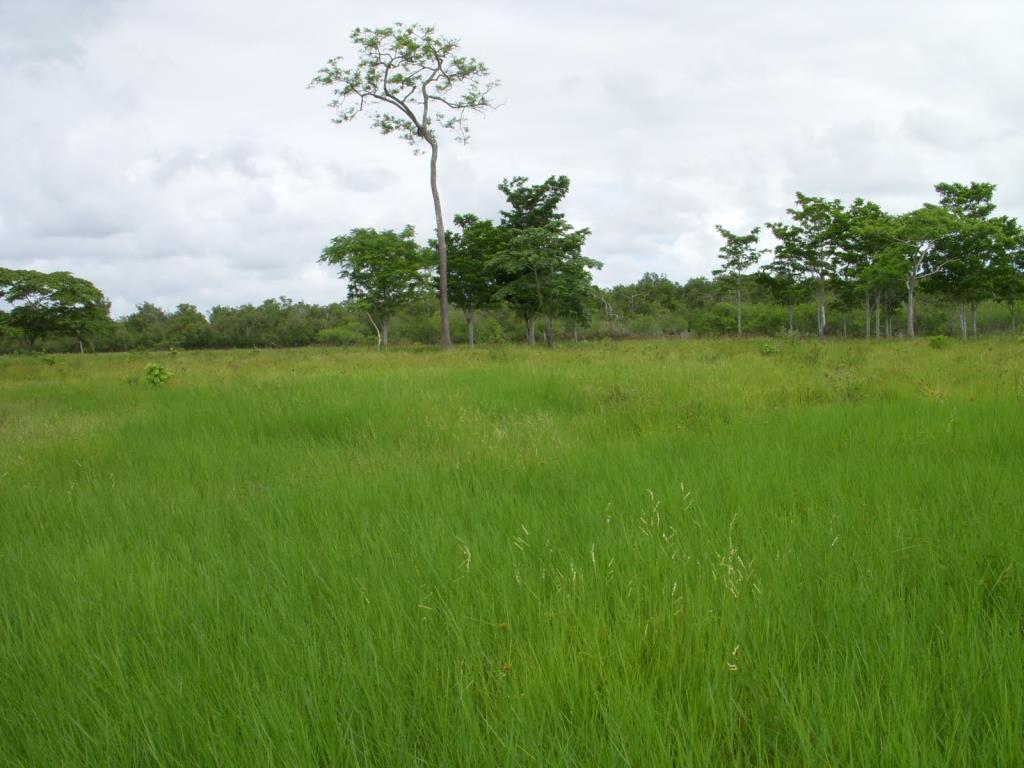 Imensa Ilha Península-Ideal Para Projetos Ecológicos 6