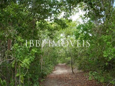 Imensa Ilha Península-Ideal Para Projetos Ecológicos 7