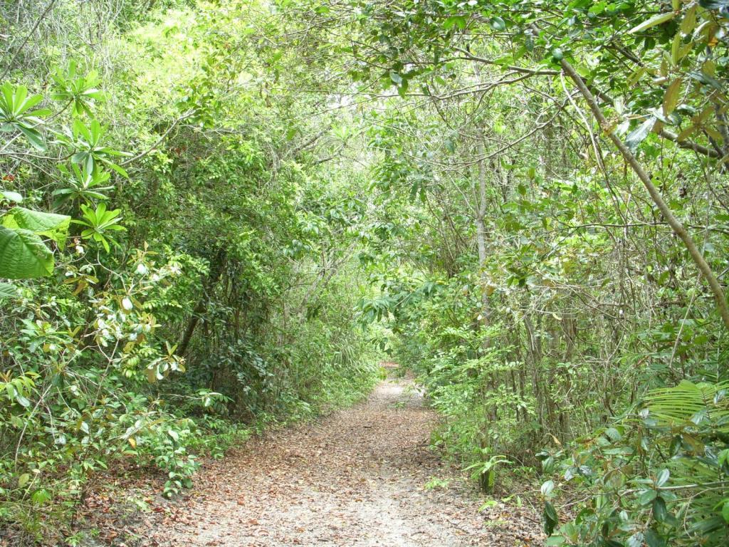 Imensa Ilha Península-Ideal Para Projetos Ecológicos 8