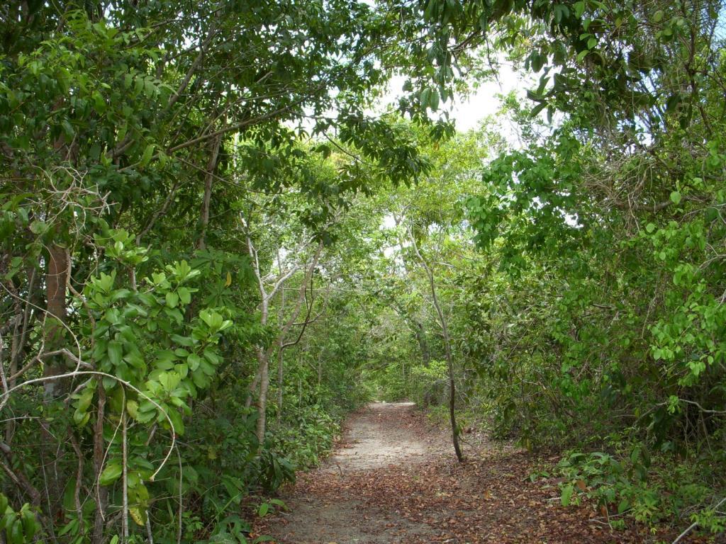 Imensa Ilha Península-Ideal Para Projetos Ecológicos 9